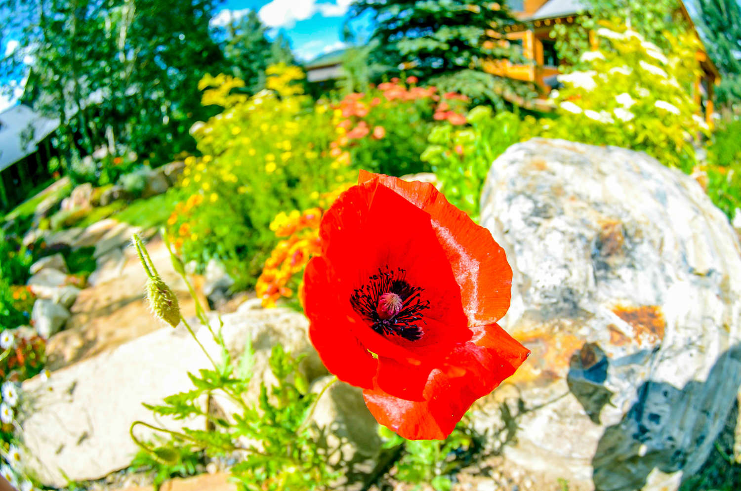 Crested Butte Wildscaping
