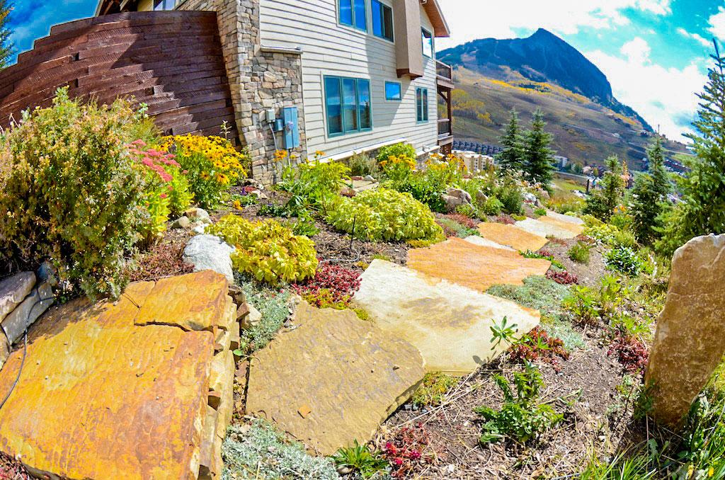 Wildscaping in Crested Butte